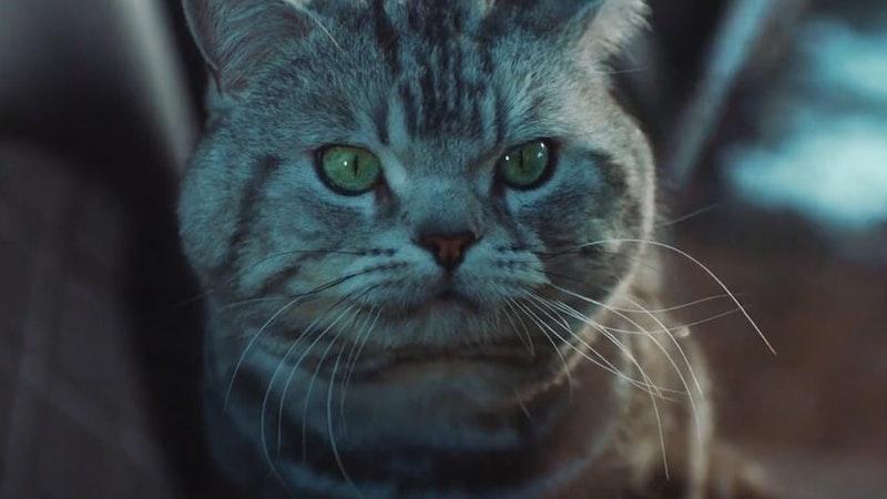 Renault - The Cat